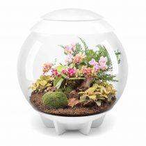 biOrb-AIR-60-biały-terrarium-kompozycja-egzotyczna