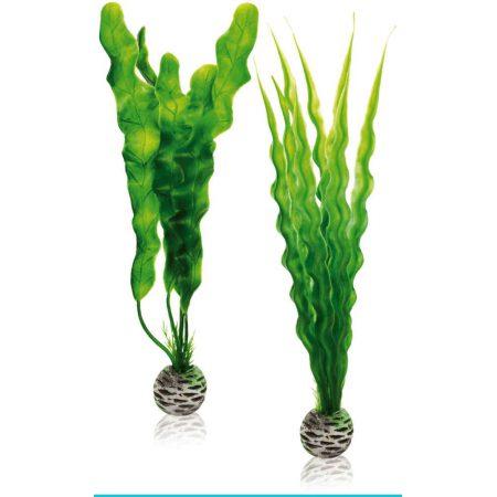 biOrb-46056 zestaw roślin M onowodek