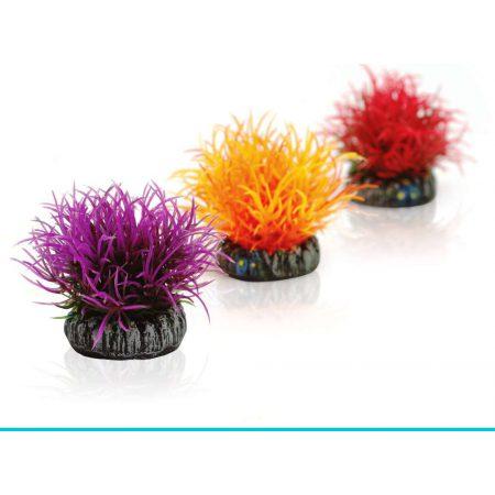 biOrb-46061 zestaw kul roślinnych kolorowych